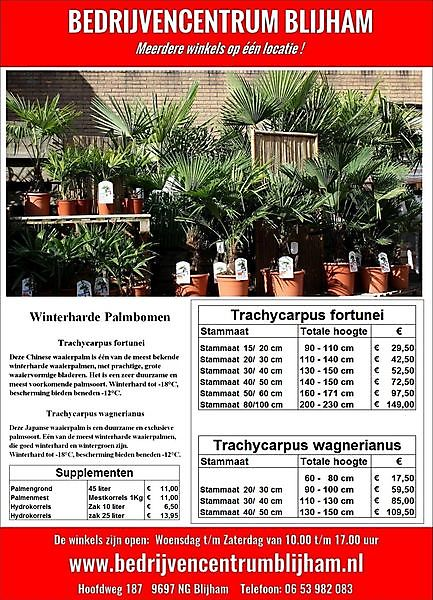 Winterharde Palmbomen vanaf  € 17.50 Blijham