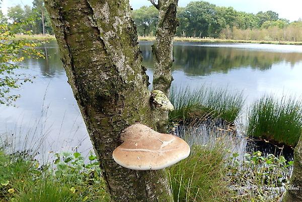 Foto paddenstoelen vennetje Ter Borg