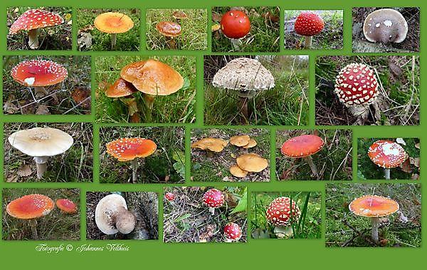 Foto paddenstoelen Sellingen