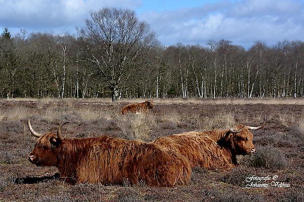 Foto Natuurgebied Sellingen
