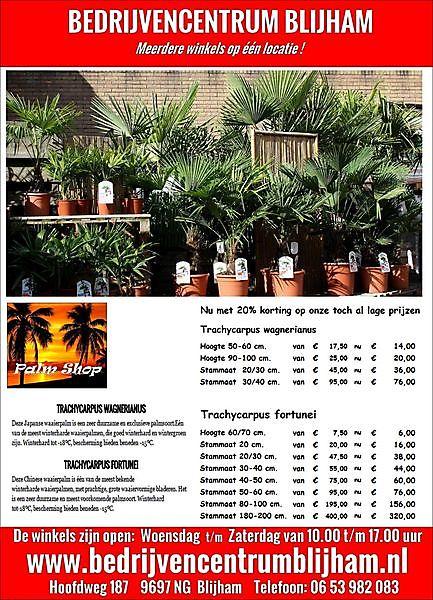 Foto We hebben weer nieuwe Palmbomen binnen gekregen Blijham