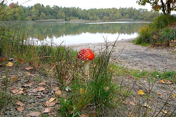 Foto herfst Sellingen