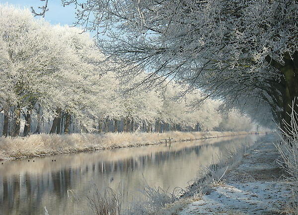Foto bevroren mist langs het Tijdenskanaal Bellingwolde