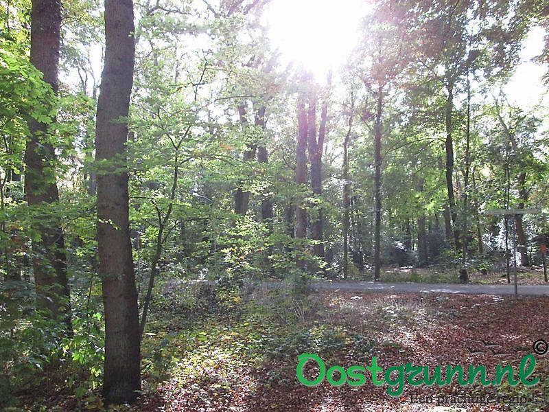 Bos bij het klooster Ter Apel