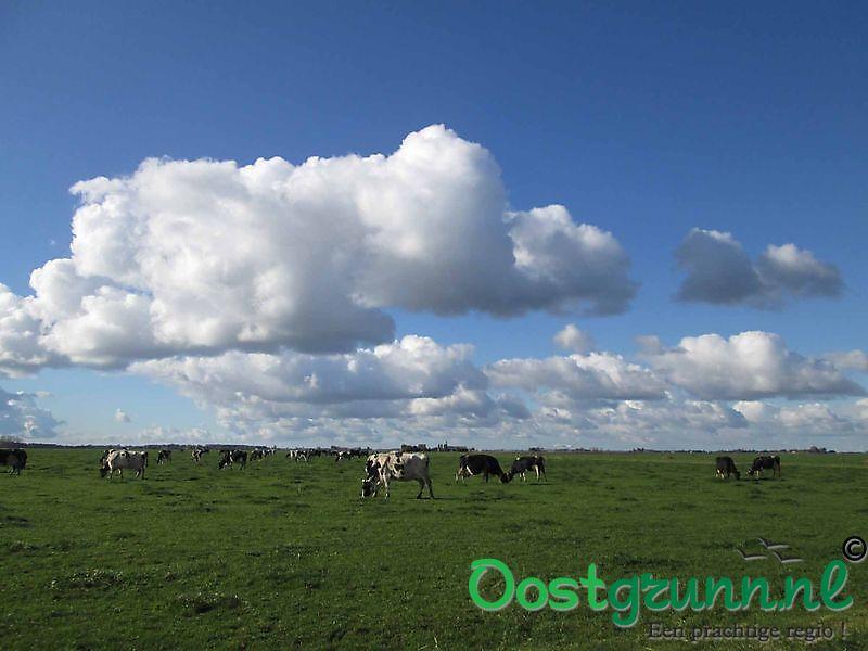 Gronings landschap met koeien Finsterwolde