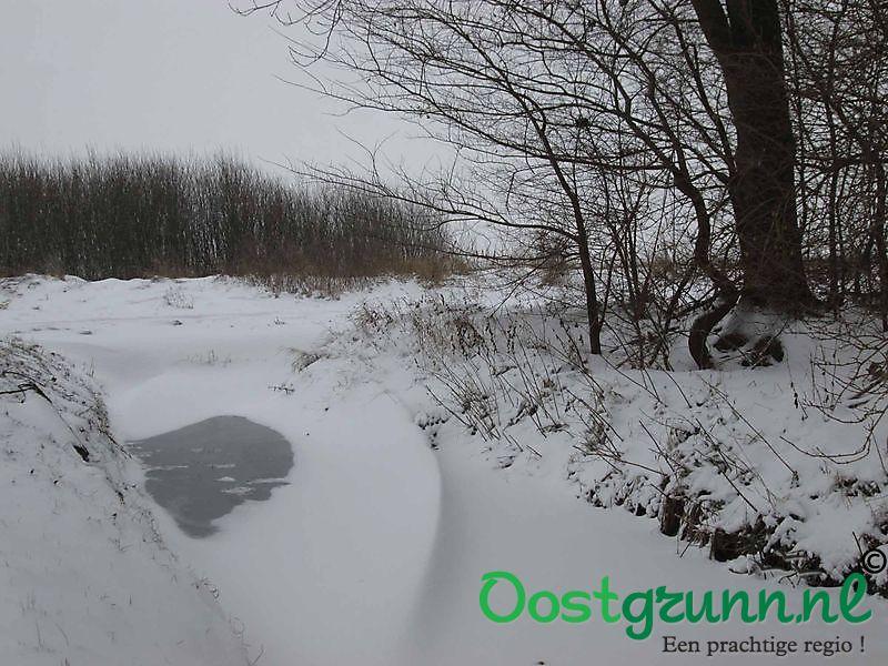 Sneeuwduinen in de Tjamme Beerta