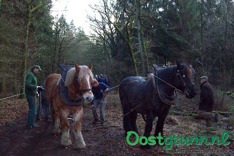 Sleep paarden voor omgehakte bomen Sellingen