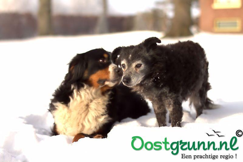 onze honden Oostwold
