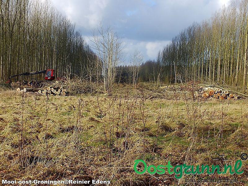Populieren bos gaat tegen de vlakte Bellingwolde