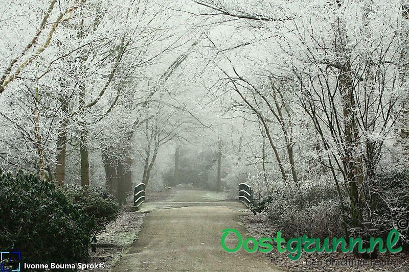 Winter in het park Winschoten