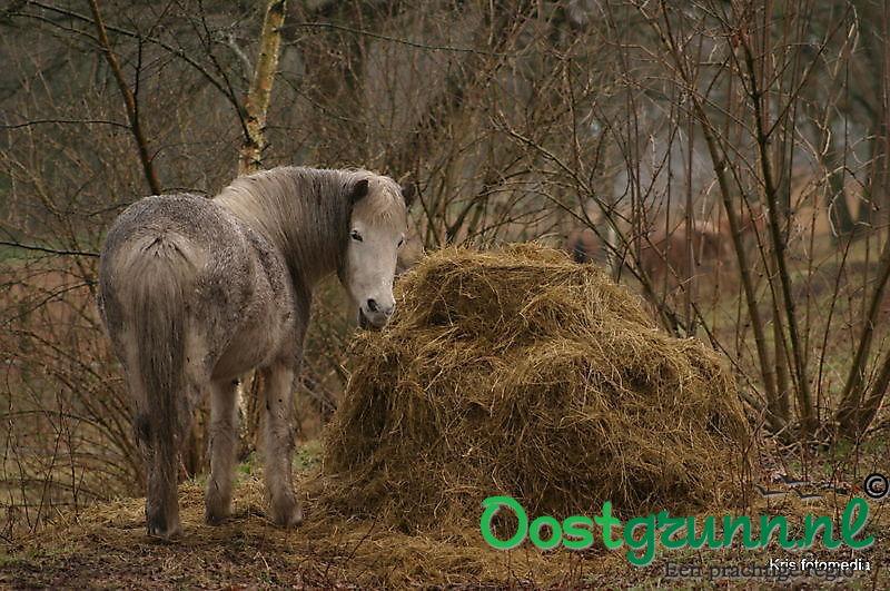paard Ter Apel