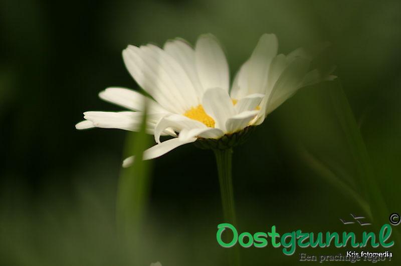 bloemen Ter Apel