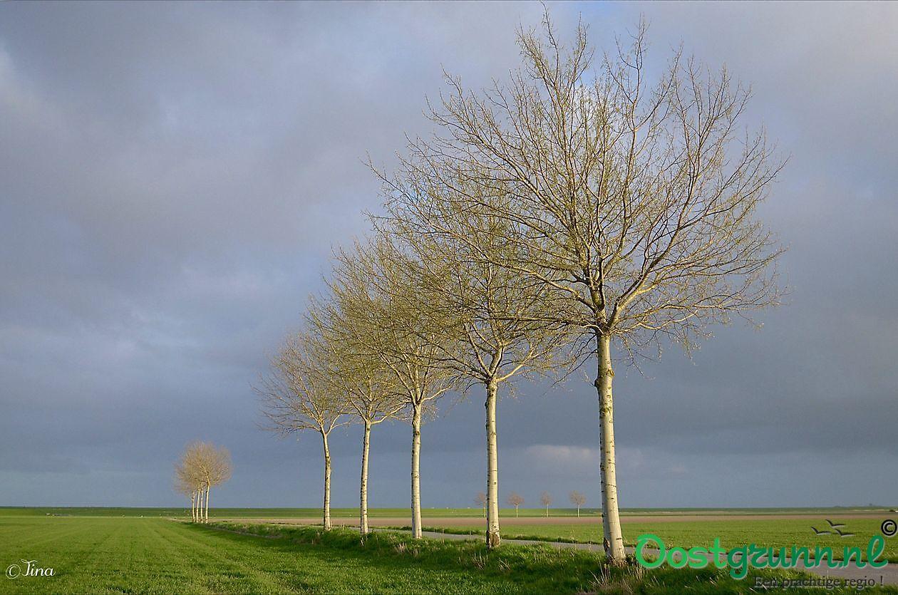 Lijnenspel in de polder Oost Groningen