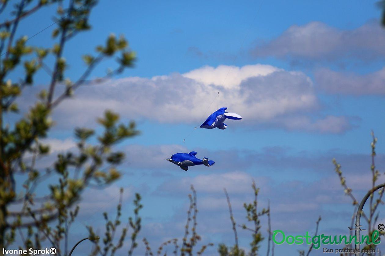 Opening Vliegerseizoen 2016 Blauwestad Blauwestad