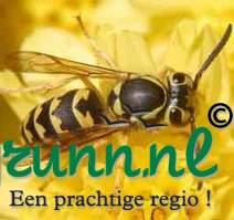 Wespen bestrijding Groningen
