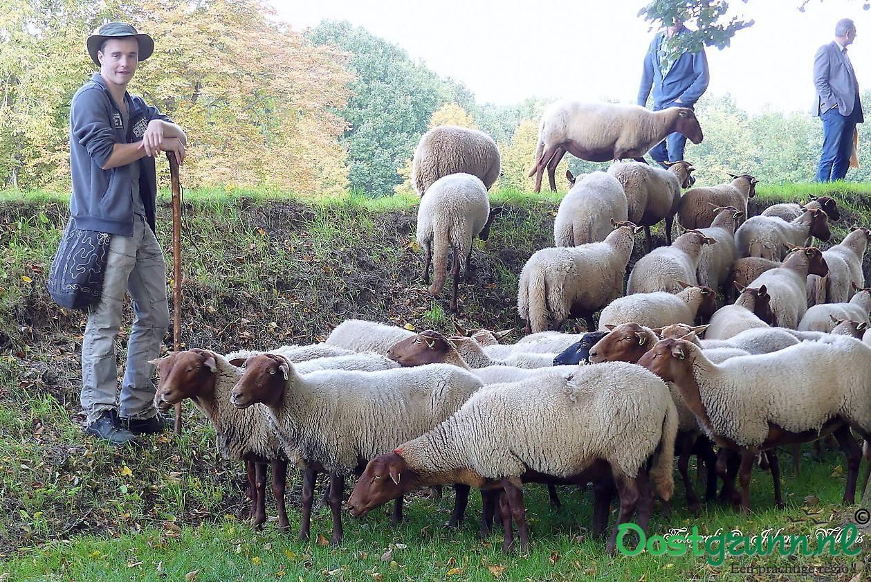 Schapenherder met kudde op de vestingwallen in Bourtange Bourtange