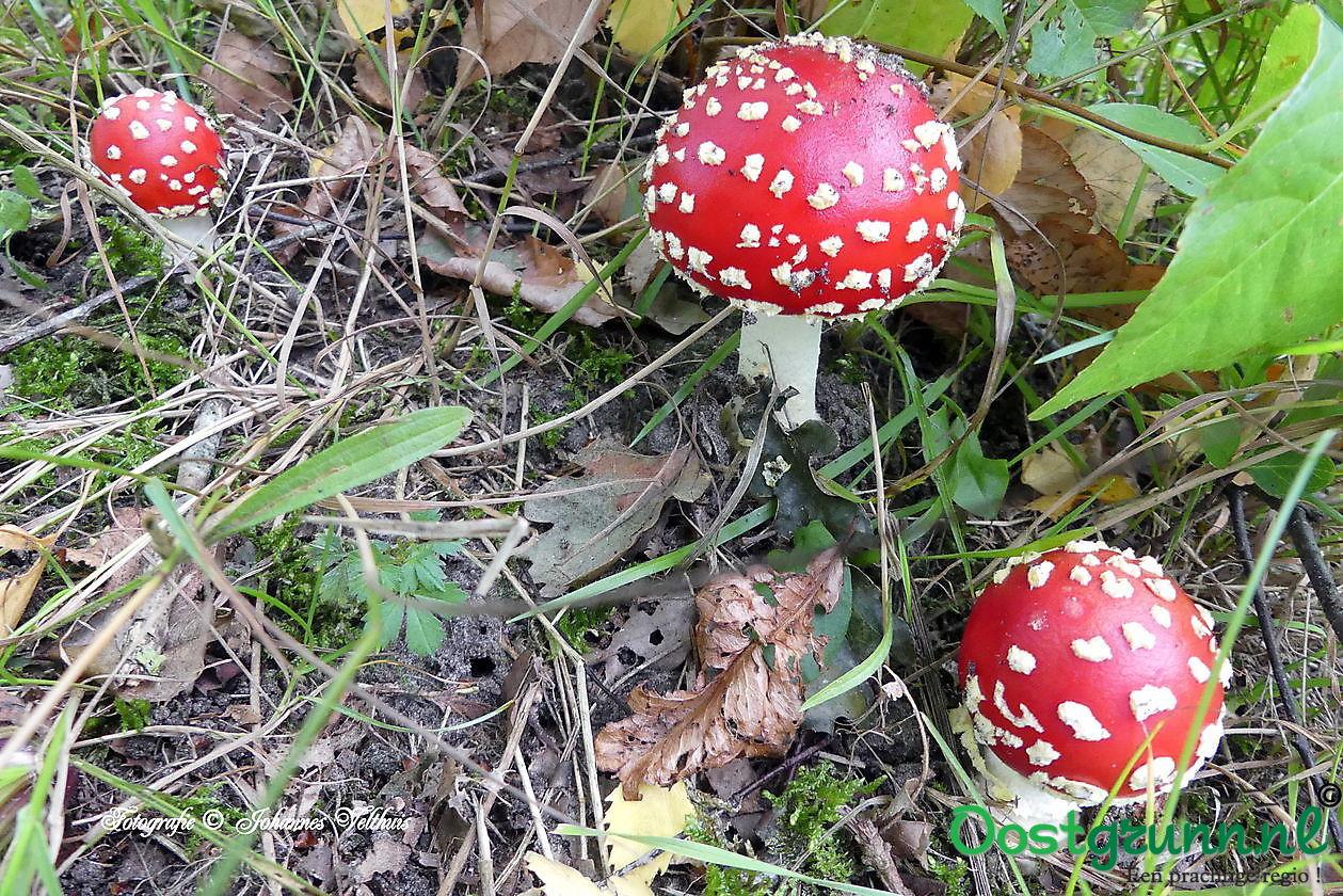 paddenstoelen Borgerveld