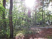 Bos bij het klooster Ter Apel, Westerwolde