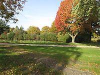 Herfstkleuren Ter Apel, Westerwolde
