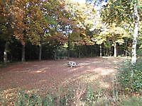 Herfstkleuren in het park Jipsingboertange, Westerwolde