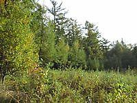 Natuurgebied Jipsingboertange, Westerwolde