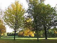 Park Musselkanaal, Stadskanaal