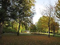 Herfstkleuren in het park Musselkanaal, Stadskanaal