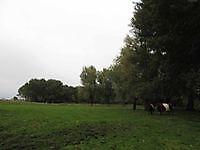 Lakenvelders bij het stadspark Winschoten, Oldambt