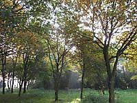 Natuurgebied Kampvennen Onstwedde, Stadskanaal