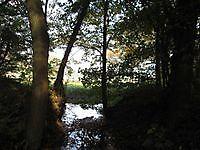 Natuurgebied Metbroekbosch Smeerling, Stadskanaal