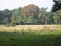 Natuurgebied bij de grens Bourtange, Westerwolde