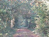 Natuurgebied De Lethe Bellingwolde, Westerwolde