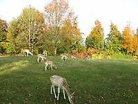 Hertenkamp Vriescheloo, Westerwolde