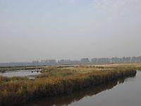 Natuurgebied De Gaast Bellingwolde, Westerwolde