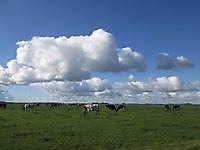 Gronings landschap met koeien Finsterwolde, Oldambt