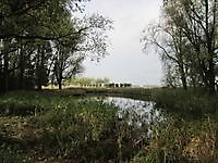 Vennetje bij de Molenweg Oudeschans, Oldambt
