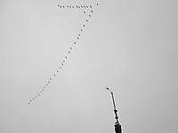 Ganzen boven het Weerstation Beerta, Oldambt
