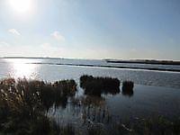 Steiger bij vogeleiland de Kikkerberg Midwolda, Oldambt