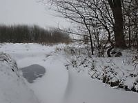 Sneeuwduinen in de Tjamme Beerta, Oldambt