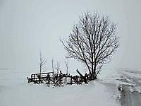 Schril contrast met de spierwitte achtergrond Beerta, Oldambt