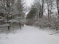 Takken buigen door van de dikke laag sneeuw Beerta, Oldambt