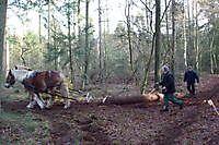 Duitse Trekpaarden Sellingen, Westerwolde