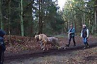 Kleine trekpaardjes Sellingen, Westerwolde