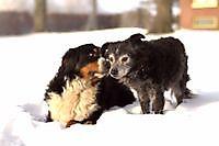 onze honden Oostwold, Oldambt
