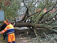 Storm zorgt voor omgewaaide bomen Beerta, Oldambt