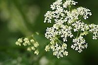 natuur / bloemen Ter Apel, Westerwolde