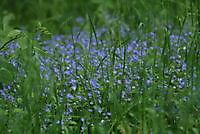 bloem uit de natuur Ter Apel, Westerwolde