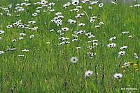 bloemwiede Ter Apel, Westerwolde