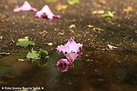 Rhododendron bloem Winschoten, Oldambt