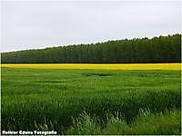 Nieuwlandse weg Bellingwolde, Westerwolde